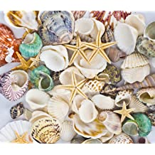 Anyumocz Sea Shells Mixed Beach Seashells Natural Colorful Sea Shells Starfish Perfect for Candle Making,Home Decorations,Fish Tank and Vase Fillers,Beach Theme Party Wedding Decor DIY Crafts